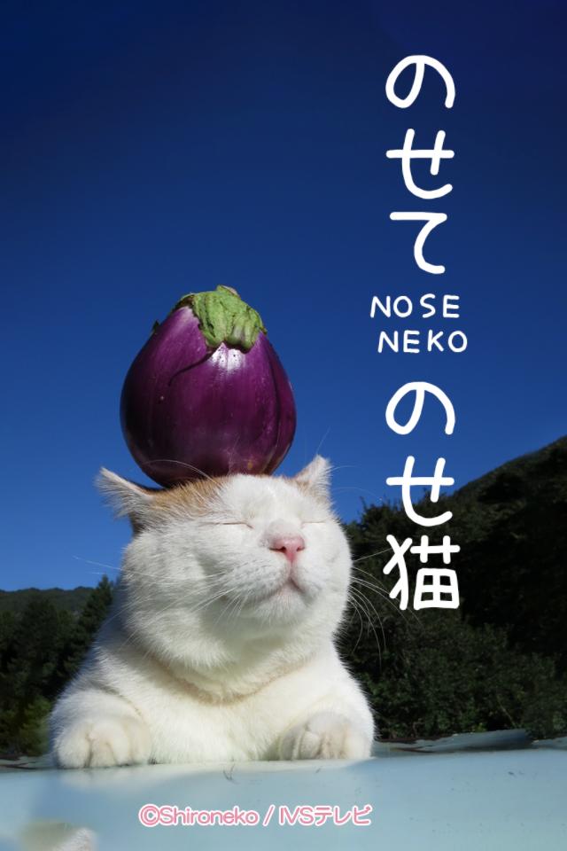 noseneko_title