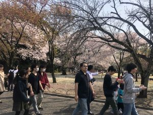 coyo_hanami201801